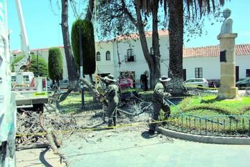 Talan decenas de árboles centenarios secos