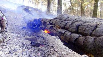 Incendio del Parque Tunari fue sofocado