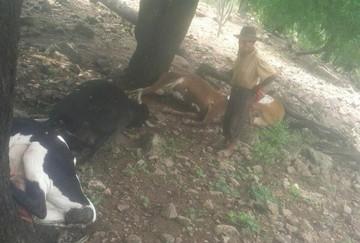 Rayo mata ganado en Poroma