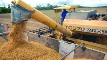Anapo reporta alza de producción agrícola