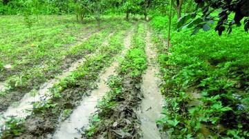 20 municipios reportan daños por lluvias