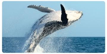 Los microplásticos tóxicos afectan a ballena de aleta