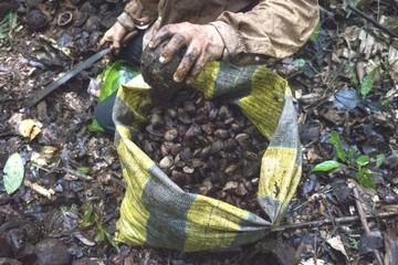 Zafreros de Bolivia rozan la esclavitud