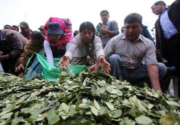 Bolivia pedirá a la OMS un estudio sobre las cualidades de la hoja de coca