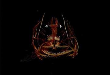 """""""Pequeño monstruo"""" a 8.200 metros de profundidad"""