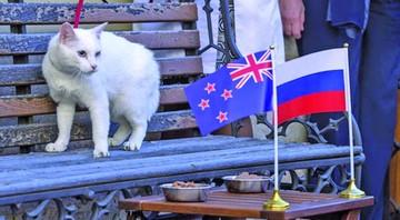 El Mundial ya tiene a su oráculo oficial: el gato Aquiles