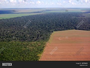 Usan bombas de semillas para evitar deforestación