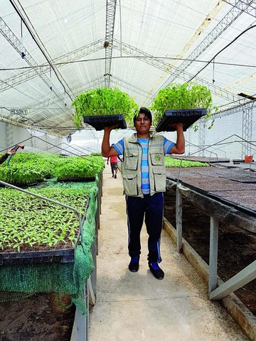 Dos millones de plantines para producir más y mejores hortalizas