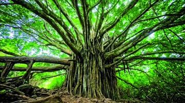Un árbol genealógico con 13 millones de personas