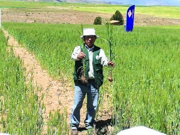 YPFB muestra resultados de uso de urea en cultivos