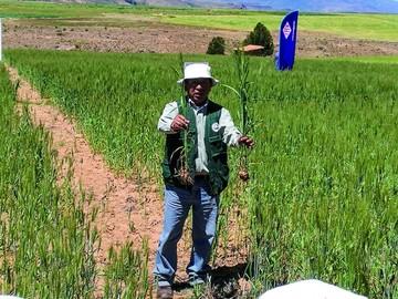 La urea de YPFB, a la conquista de los agricultores de Tarabuco