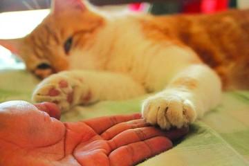 Confirman primer caso de rabia felina en Sucre