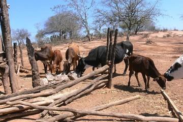 Macharetí: 231 atajos para garantizar dotación de agua destinada al ganado