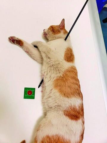 Al gato atravesado por una flecha le quedan seis vidas