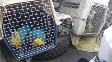 Rescatan a aves silvestres de casas en Sucre