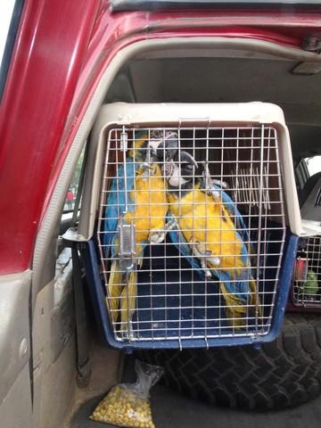 Aves rescatadas  ya están en refugio