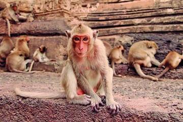 En una ciudad de Tailandia, los monos viven como reyes