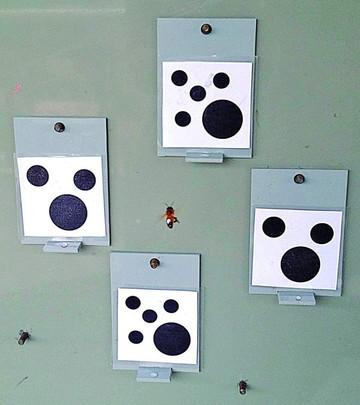 Hallazgo: ¡Las abejas saben contar desde cero!