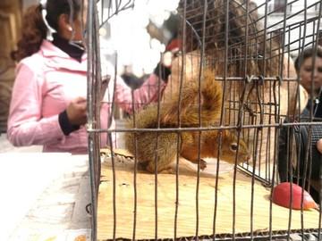 Rescatan a tres animales silvestres que estaban en manos de particulares