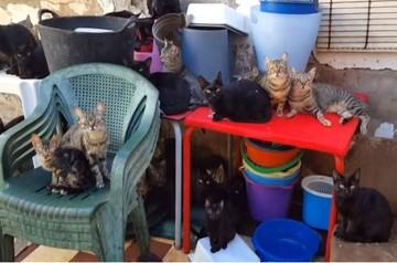 Rescatan a 101 gatos hacinados en una vivienda de 37 metros