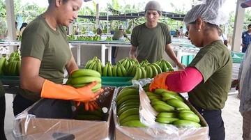 Cae exportación de banano 18% y ven la peor crisis de la década