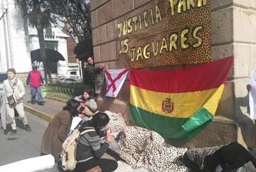 Activistas piden en el TSJ sanción contra traficantes de pieles y colmillos de jaguar