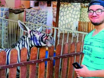 Lío en un zoo por foto de una burra pintada de cebra