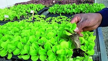 Yotalilla cuenta con centro experimental de hortalizas