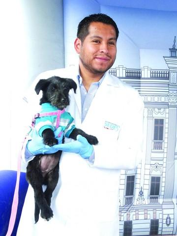 Perros y gatos, a vacunarse hoy