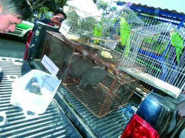 27 animales silvestres son enviados a parques