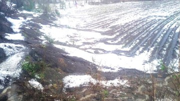 Tarvita pierde una vida y cultivos en tormenta