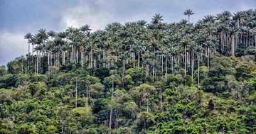 Buscan manejo sostenible de los recursos forestales