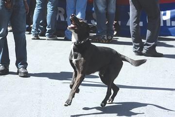 """Muere perro """"marchista"""""""