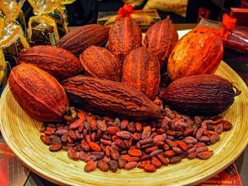 Instalan primer centro de cacao nativo en el Beni
