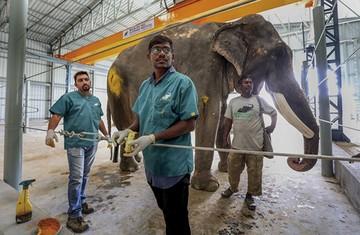 Los elefantes ya tienen un hospital