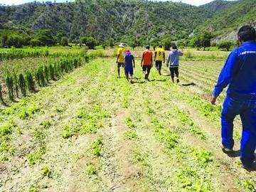 Granizada deja sin producción a unas seis comunidades