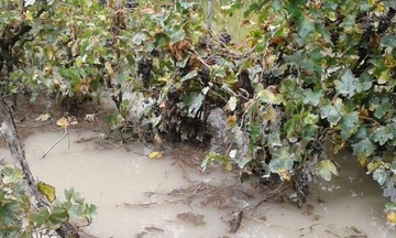 Desborde de ríos provoca pérdida de cultivos en Camargo