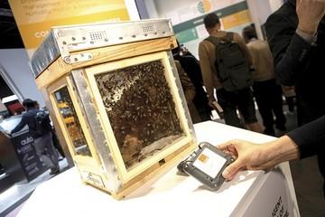 Las abejas también están conectadas a la red