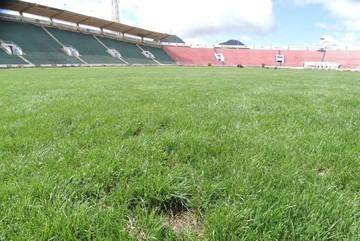 Plaga de gusanos obliga a cerrar el estadio Patria por 15 días
