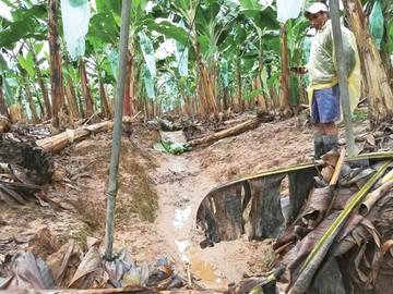 Desastres afectaron 25.000 hectáreas en cuatro meses