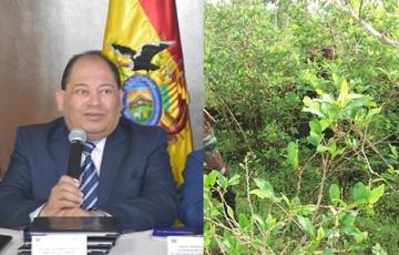 Ministro Romero admite que se produce más coca de la que se consume