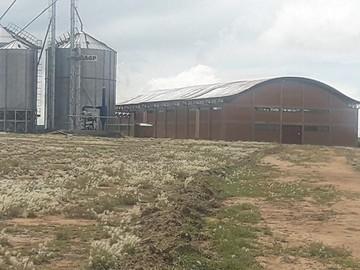 Aún no entra en funcionamiento molino de trigo