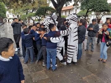 Falta de claridad frena retorno de las Cebras