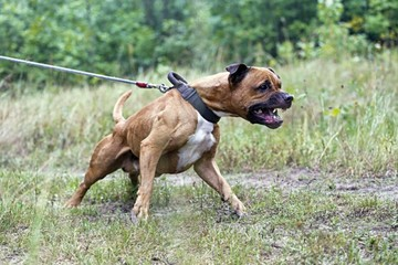 Zoonosis registra a canes peligrosos a partir de hoy