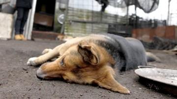 Perdón judicial para sujeto que envenenó a tres perros