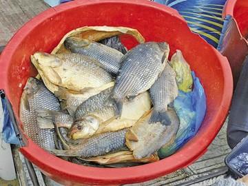 Decomisan en mercados 26 pescados y utensilios