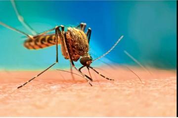 Dengue: Siguen acciones de prevención