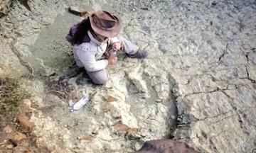 Exigen atender huellas de dinosaurios en el D-8