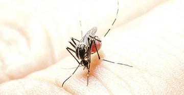 Chuquisaca reporta cinco nuevos casos de dengue