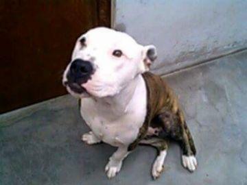Una perra asiste como testigo a un juicio en España por maltrato animal